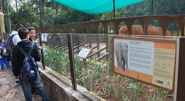 Elefantes Asiáticos no Zoo
